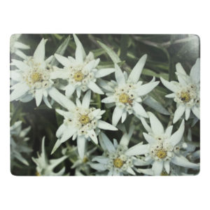 placemat edelweiss (4)*